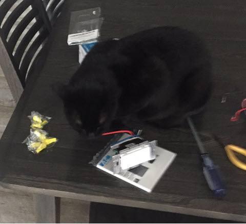 Feline Helper