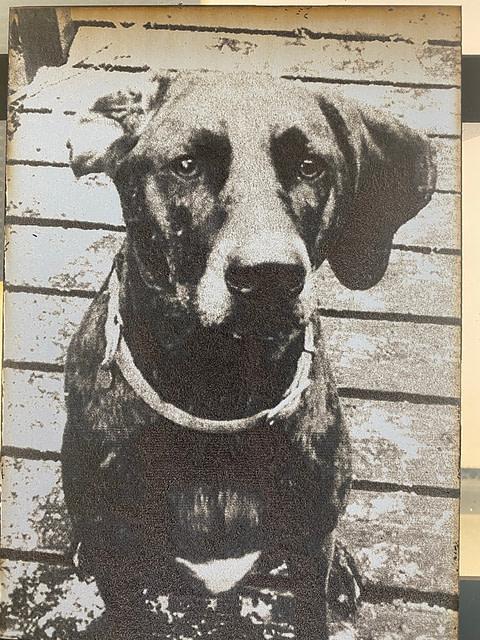 Finished Dog Photo Laser Engraving