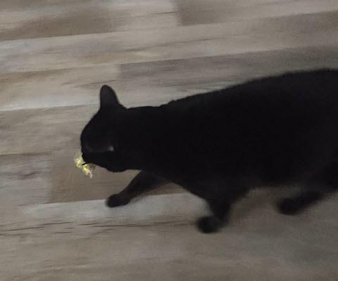 Feline Helper Stealing Wire Nuts