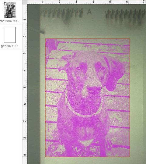 Dog Engraving Image in Glowforge Software App