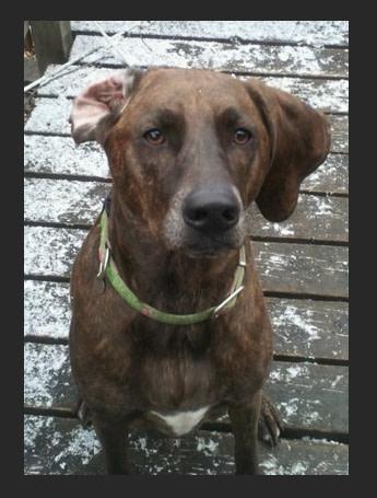 Cropped Dog Engraving Photo