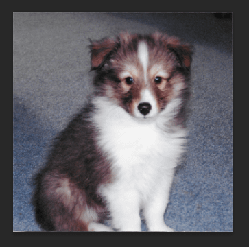 Square Puppy Photo