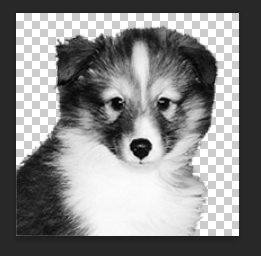 Removing the Puppy Photo Background